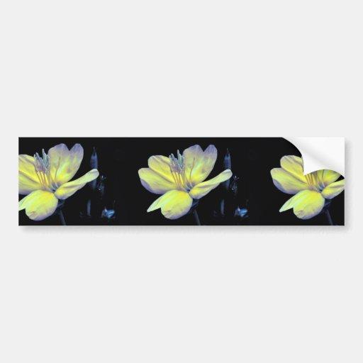 Evening Primrose Bumper Sticker