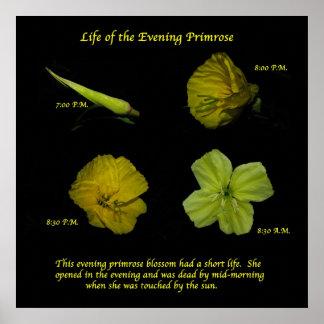 Evening Primrose Posters
