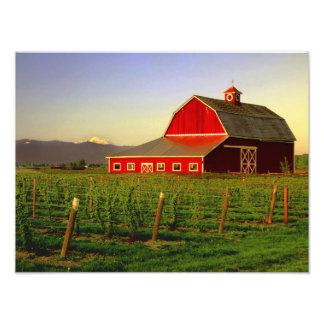 Evening sun on a barn in Washington's Skagit Photo Print