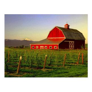 Evening sun on a barn in Washington's Skagit Postcard