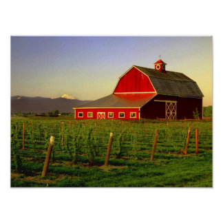 Evening sun on a barn in Washington's Skagit Poster