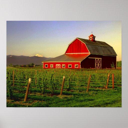 Evening sun on a barn in Washington's Skagit Posters