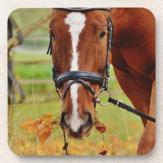 Eventing Horse Grazing Beverage Coaster