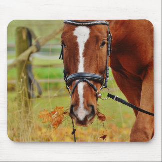 Eventing Horse Grazing Mouse Pad