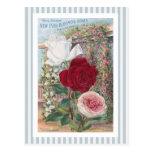 Ever-Blooming Roses Vintage Art Postcard