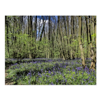 Everdon Stubbs Wood Bluebells Postcard