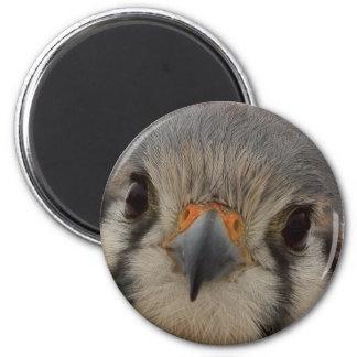 Everett Fridge Magnets