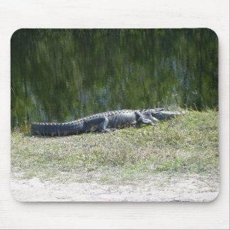 Everglades - aligator mouse pad
