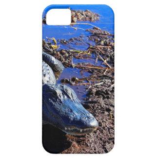 Everglades Alligator iPhone 5 Cover