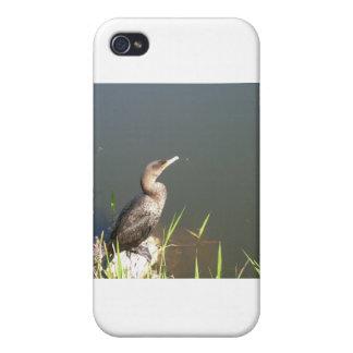 Everglades - Bird iPhone 4 Cover