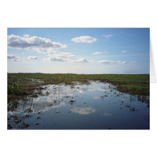 Everglades Card