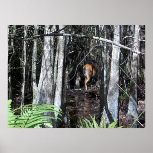 Everglades Deer Hiding poster