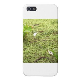 Everglades Covers For iPhone 5