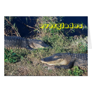 Everglades National Park Alligators at Ease Card