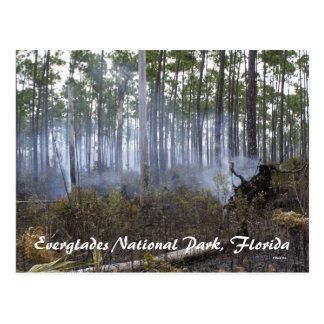 Everglades National Park, Florida Postcard