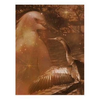 Everglades - National Park in Florida Postcard