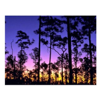Everglades National Park, Pinelands Area, Florida Postcard