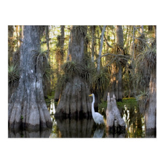 Everglades National Park Postcard