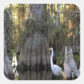 Everglades National Park Square Sticker