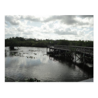 Everglades Postcard