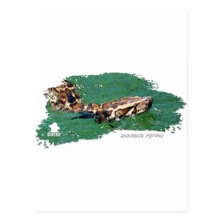 Everglades Python 01 Postcard