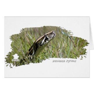 Everglades Pythons 02 Cards