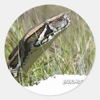 Everglades Pythons 02 Classic Round Sticker