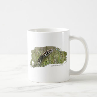 Everglades Pythons 02 Coffee Mugs