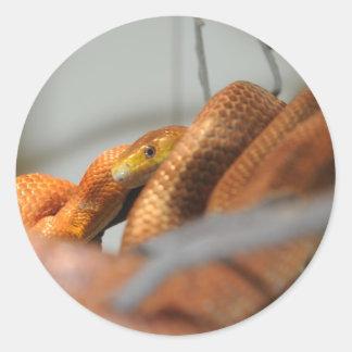 Everglades Rat Snake Classic Round Sticker