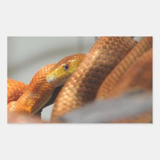 Everglades Rat Snake Rectangular Sticker