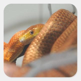 Everglades Rat Snake Square Sticker