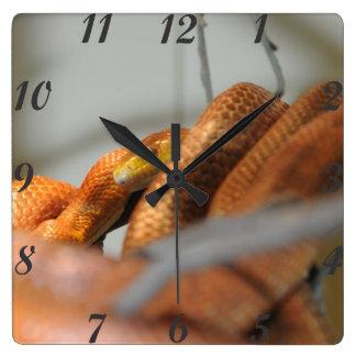 Everglades Rat Snake Square Wall Clock