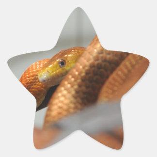 Everglades Rat Snake Star Sticker