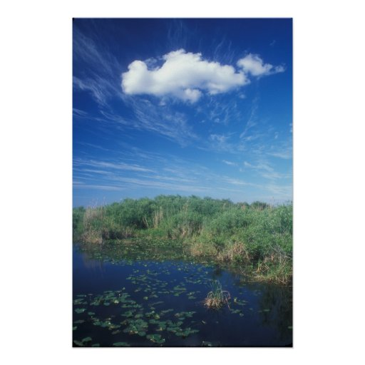 Everglades slough and sky posters