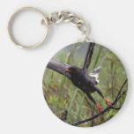 Everglades Snail Kite #1 keychain