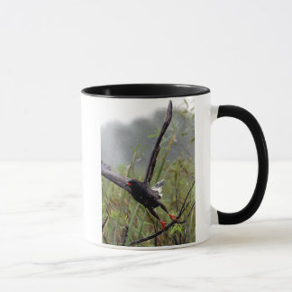 Everglades Snail Kite #1 mug