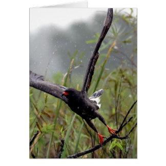 Everglades Snail Kite #1 note card