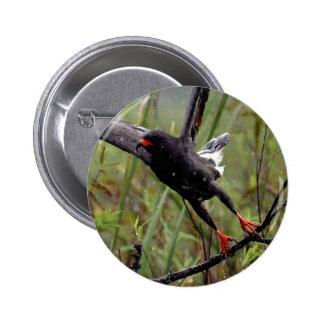 Everglades Snail Kite #1 pin