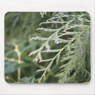 evergreen, cypress leaves mouse pad