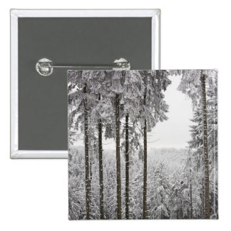 Evergreen forest in winter button