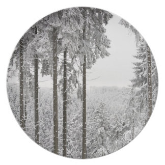Evergreen forest in winter dinner plates