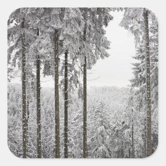 Evergreen forest in winter square sticker