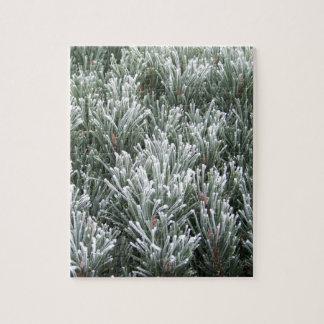 Evergreen Freeze Puzzle