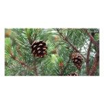 Evergreen Holidays Photo Card