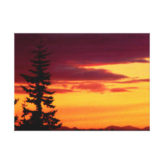 Evergreen in the Sunset Canvas Print