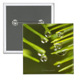 Evergreen needles and rain droplets pin