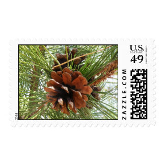 Evergreen Pine Cone Postage Stamps