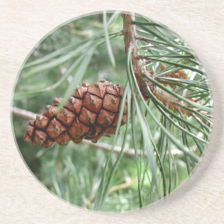 Evergreen Pine Cone Thirsty Sandstone Coaster