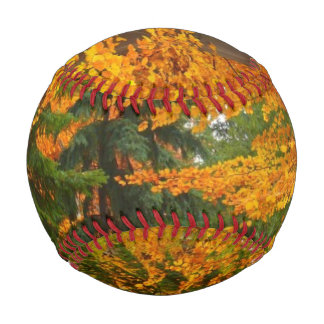 Evergreen Pines and Autumn Trees Baseball