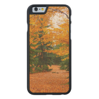 Evergreen Pines and Autumn Trees Carved® Maple iPhone 6 Slim Case